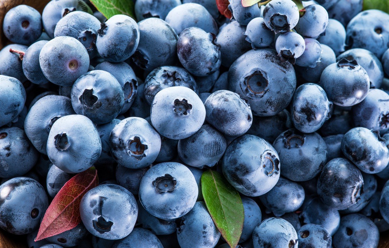 chernika-fresh-golubika-iagody-berries-blueberry
